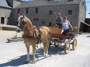 Ruiters en hun paarden